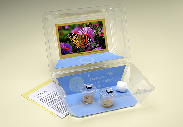 Butterfly Hatching Kit, contains 2 Painted Lady Caterpillars.