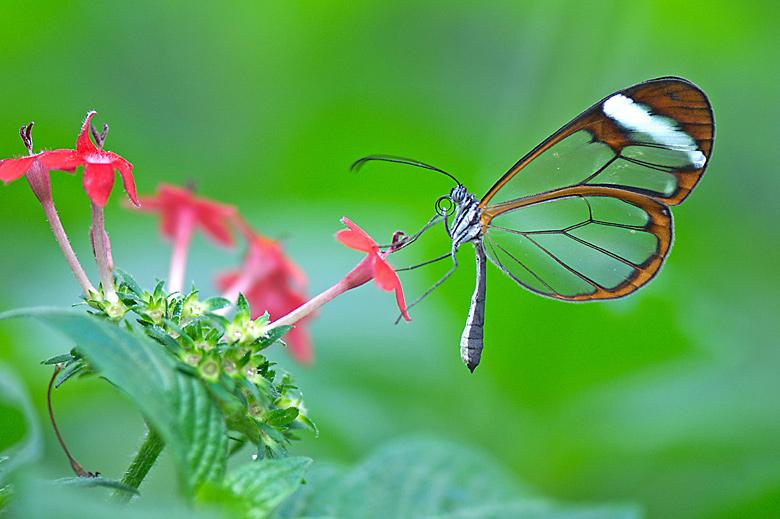 Galería de Fotos: Butterfly Festival Swarms Pearl
