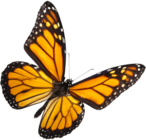 Butterfly Farms | Research, Conservation, and Education